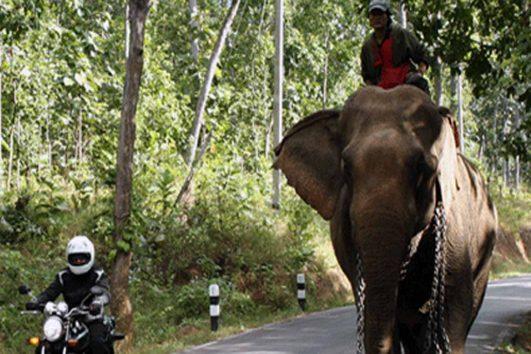 motorbike_tours_thailand